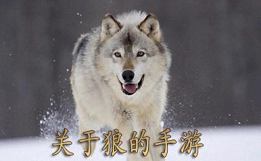关于狼的游戏