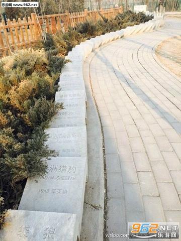 米诺骨牌造型的世界灭绝动物墓地