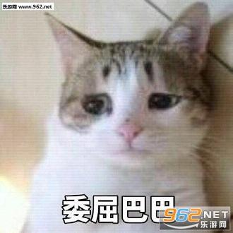 委屈巴巴猫系列表情不用表情包谢图动图片