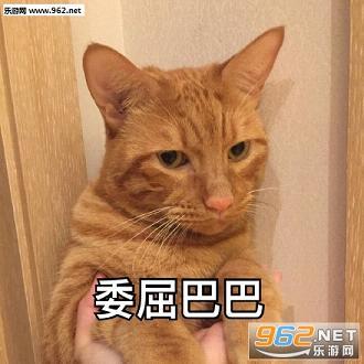 猫咪委屈粑粑表情包图片