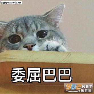 图片委屈粑粑猫咪微信群里的表情表情图片素材图片