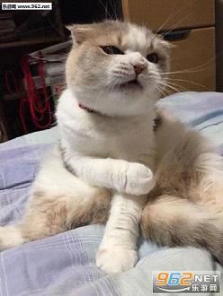 人表情包是一套搞笑的表情,很多的小伙伴都喜欢养猫,因为猫非常的可爱