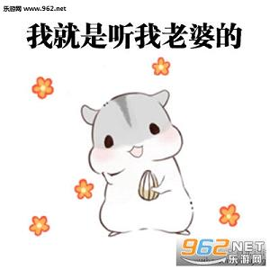 hamham仓鼠表情包老公图片|hamham仓鼠哄老婆表情包