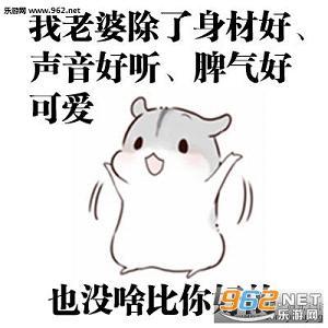 hamham仓鼠表情包老公图片 hamham仓鼠哄老婆表情包下载 乐游网游