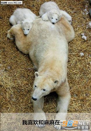小北极熊保护环境表情图片|小北极熊可爱表情包下载