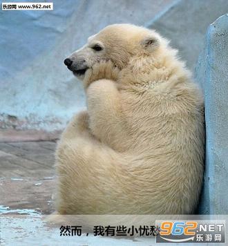 小北极熊可爱表情图片包动态爱情字带晚安表情图片