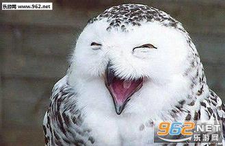 各种动物笑脸表情包