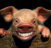 各种举起动物表情表情来笑脸包图片