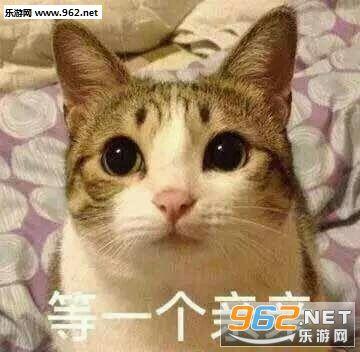 壁纸 动物 猫 猫咪 小猫 桌面 360_352图片