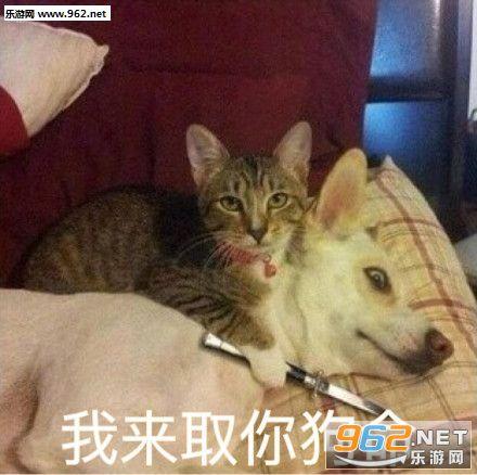 猫咪超可爱表情包无水印|你的小可爱突然出现喵表情