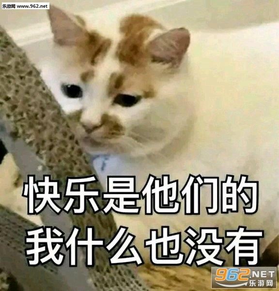 楼楼猫表情包大全|网红猫楼楼gif静态图大全下载高清图片
