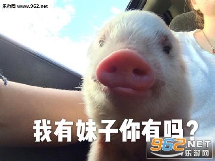 我的小猪猪在吗猪猪表情包图片大全|心肥意冷肥猪表情