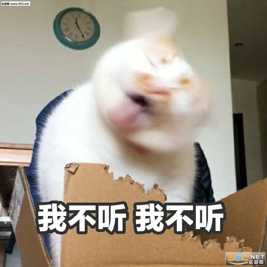 一大口亲亲楼楼猫图片图片的卡疑问通表情表情动态图片