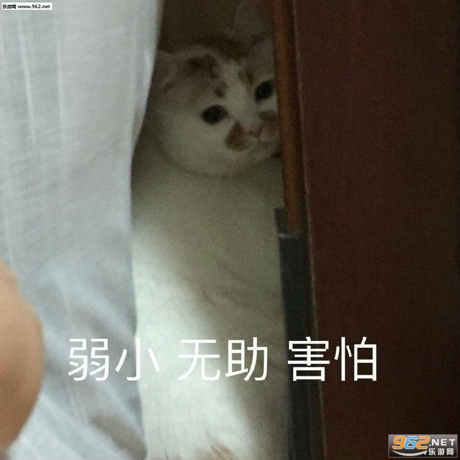 wink表情楼楼gif大全表情宝宝猫咪|一大口亲动态图片包乖巧生病图片