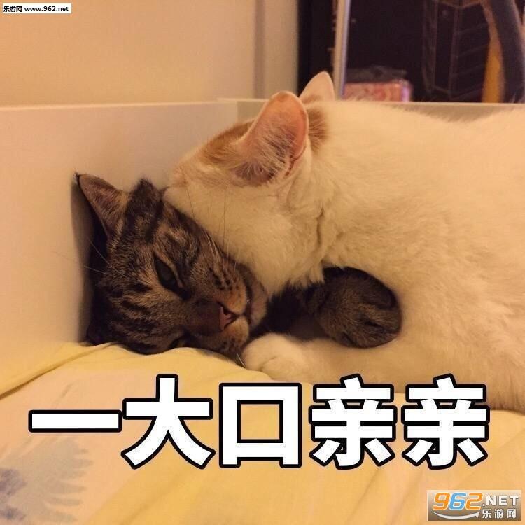 一大口领导楼楼猫大全表情图片微信的亲亲表情图片包表示图片