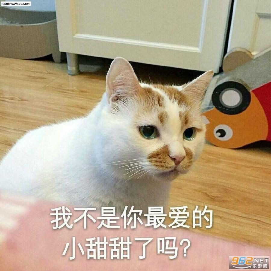 一大口亲亲楼楼猫表情包图片图片