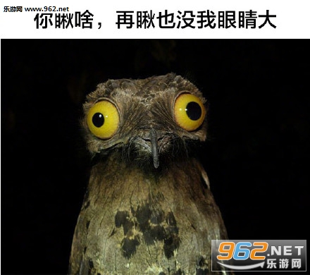 这些动物都是戏精表情包|给你个眼神你自己体会猫头鹰
