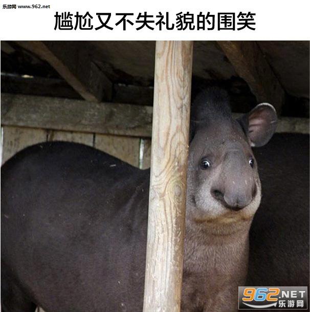 就喜欢你这种没见过世面的动物表情包带字图片 我就是