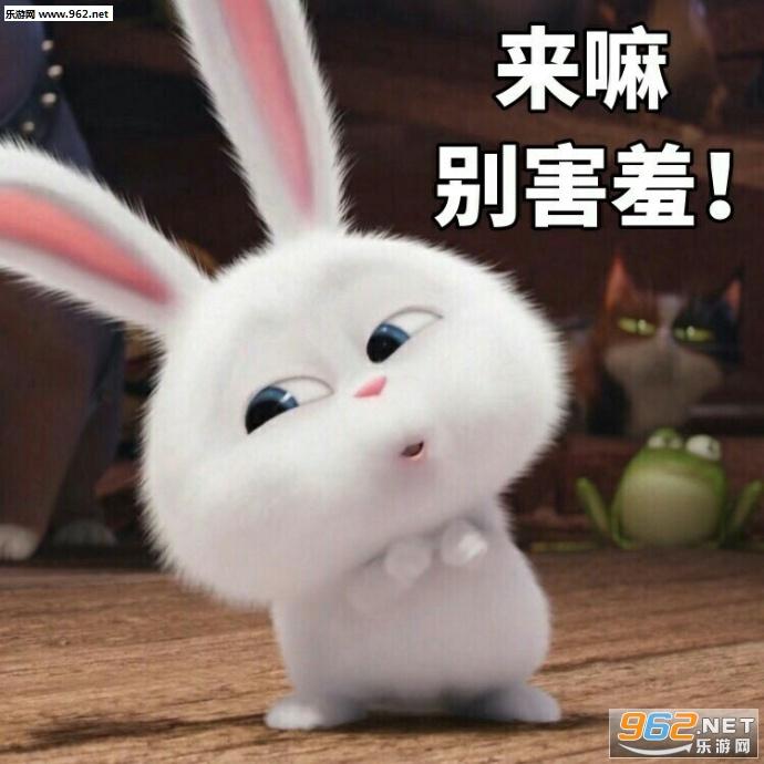 你知不知道你很过分表情大全图片图片|期待1的非常兔子可爱表情包图片