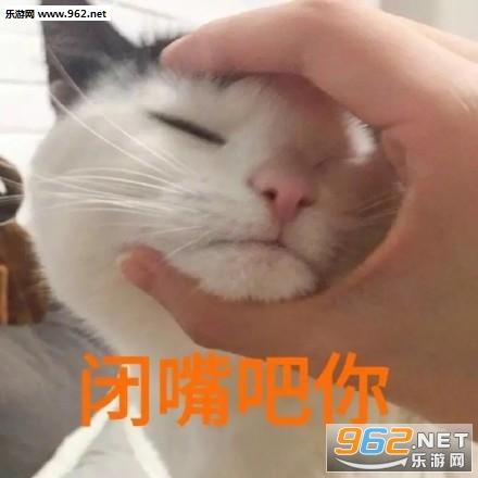 可把我耐坏了猫咪傲娇猫咪|骂人吧你表情表情包话闭嘴潮汕搞笑图片