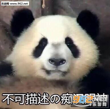 我不听我不听小灰灰熊猫成实表情包图片 气到哭泣熊猫