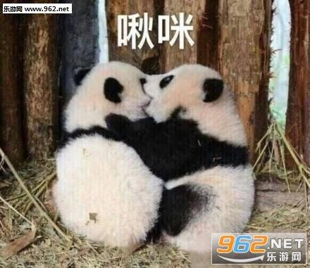 气到哭泣熊猫表情包图片 《气到哭泣熊猫表情包图片》是一款非常可爱