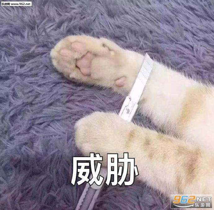 猫爪威胁表情没有表情包人的见见图片