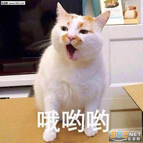 2009版qq下载_楼楼猫表情包大全|网红猫楼楼gif静态图大全下载高清无水印-乐游 ...