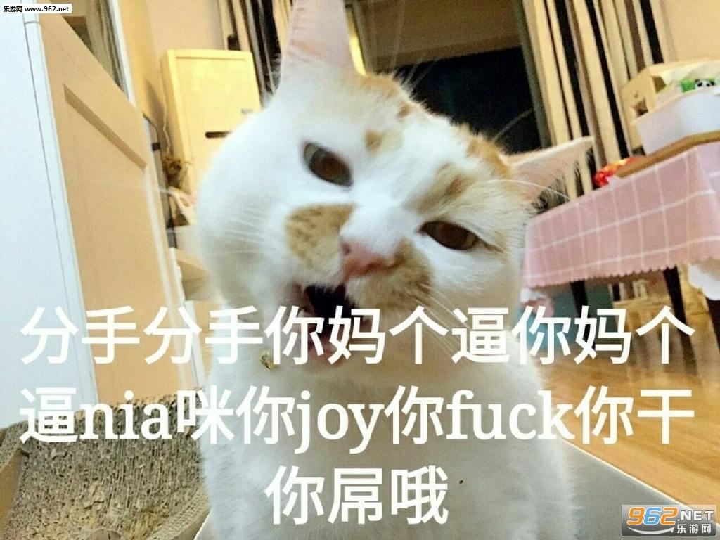 一大口亲亲楼楼猫图片表情a图片搞笑图卡通图片