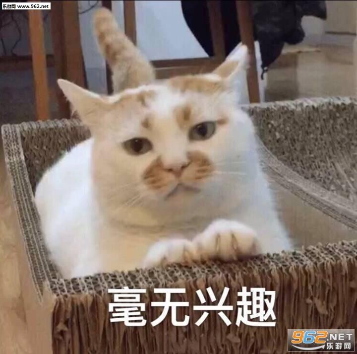 一大口亲亲楼楼猫全集图片微信伤心图片表情大表情图片