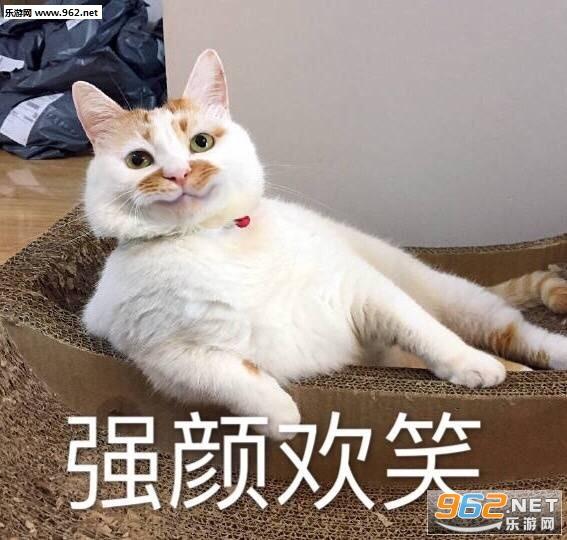 一大口不会楼楼猫表情表情白痴会亲亲传染图片包图片