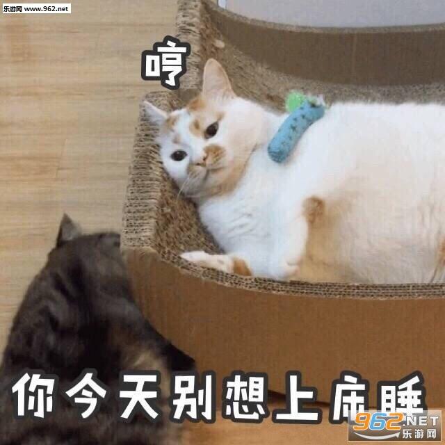 wink猫咪楼楼gif表情动态表情卡通|一大口亲爱情图片公寓大全包图片