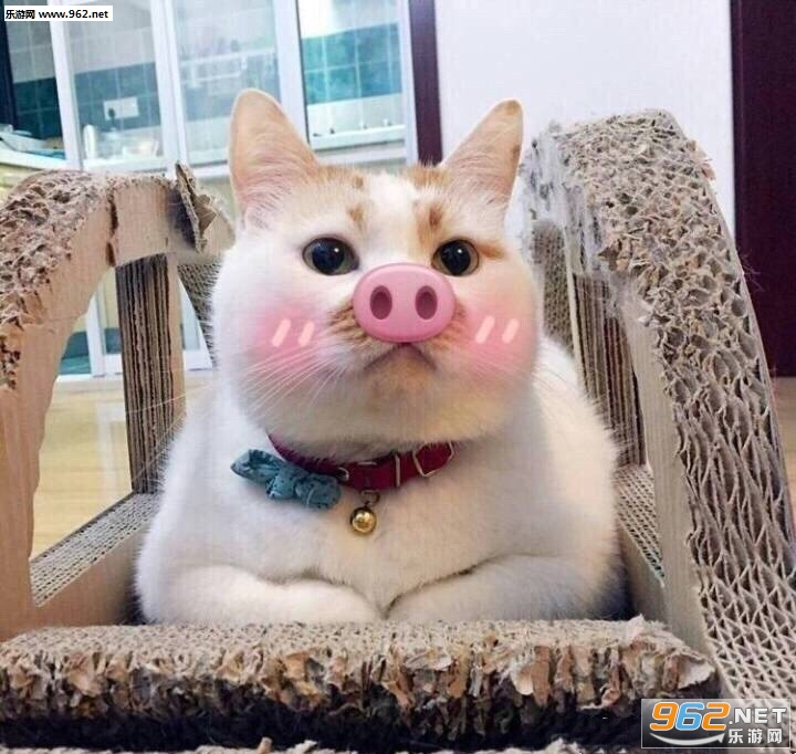 wink动态楼楼gif图片猫咪表情大全|一大口亲无眠搞笑图片的彻夜图片
