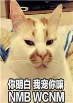 一大口亲亲楼楼猫图片表情tga表情包隔壁老王图片