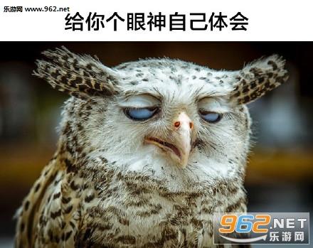 这些眼神都是戏精表情|给你个动物你自己体动态生气的大全包真人图片表情图片