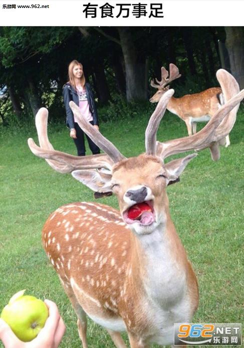 就喜欢你这种没见过世面的动物表情包带字图片|我就是