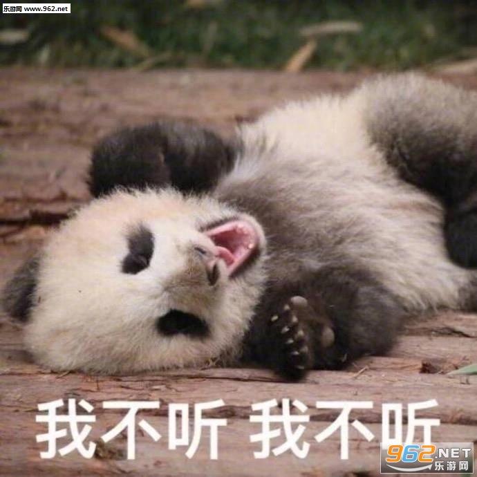 哭泣的动物标本