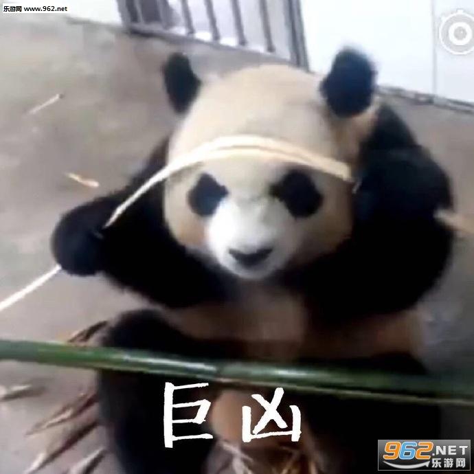 气到哭泣熊猫表情表情微动画信图片包删掉图片