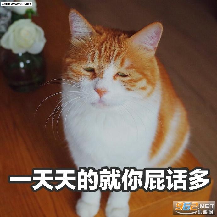 表情你在玩火丧猫女人水印无表情不准别人高清包看图片