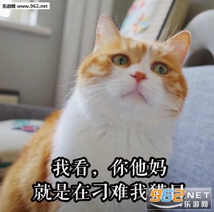 今天真玩火骗自己的猫日女人 表情信大保健表情包微gif你在开心图片