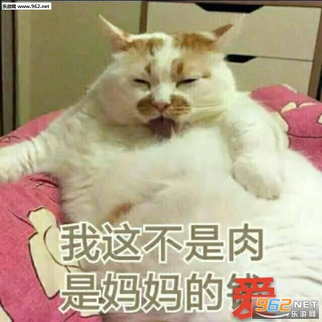 我这不是肉是妈妈的钱猫咪表情包图片