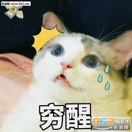 壁纸 动物 狗 狗狗 猫 猫咪 小猫 桌面 440_440