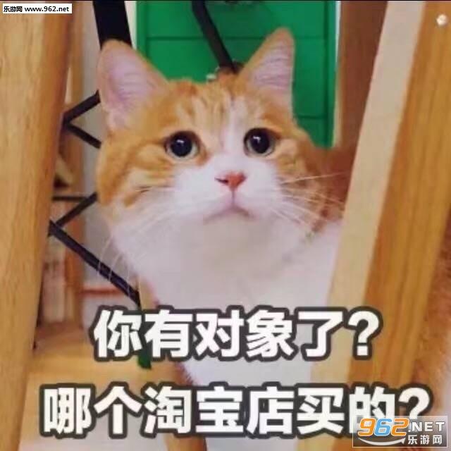 骗你是小猫表情图片醒醒你排名掉了表情包图片