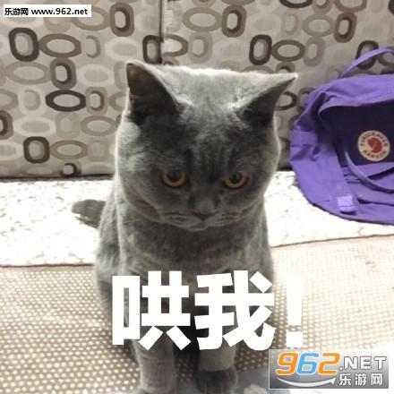 人要上班丧猫表情情表qq可包斗小仓爱鼠图图片