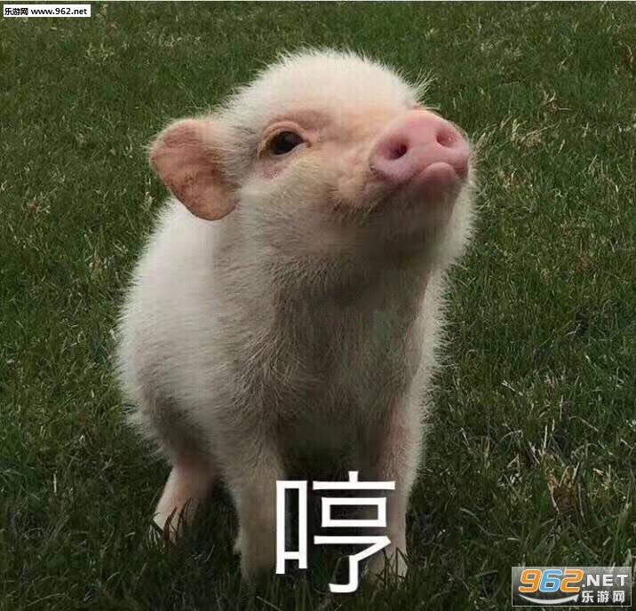 你真是我的掌上明猪表情表情 猪自杀图片就不老子图片包表情图片