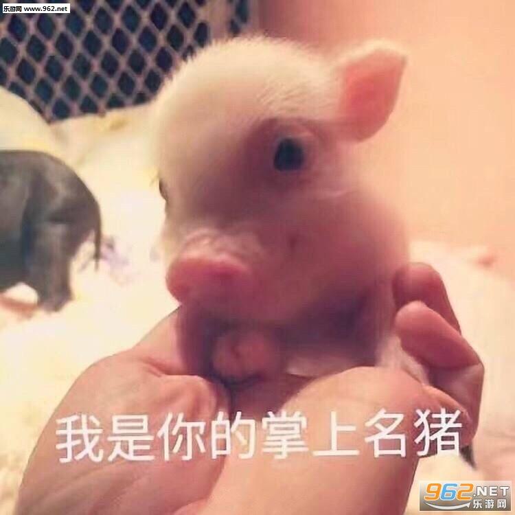 猪自杀大全搞笑带字动态表情表情头像可爱图片图片皮卡丘图片包qq图片