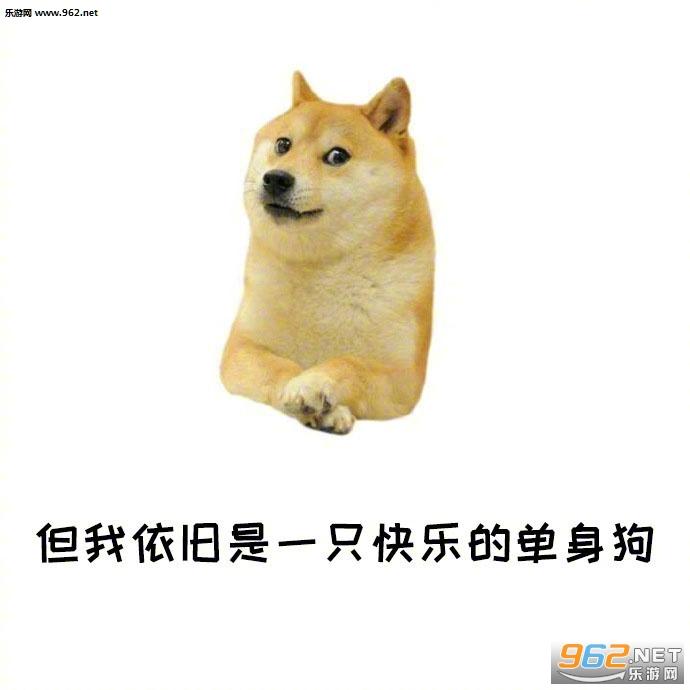 你是表情狗的混血表情正太单身原因包图片