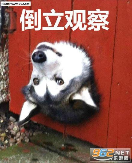 换个表情暗中v表情图片表情包熊猫大司马大全姿势图片