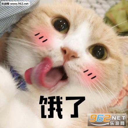 好冷啊,我也想进被窝睡觉觉猫咪表情包