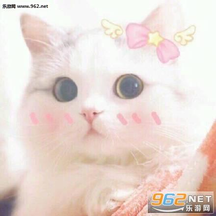 可爱小猫很冷图片高清